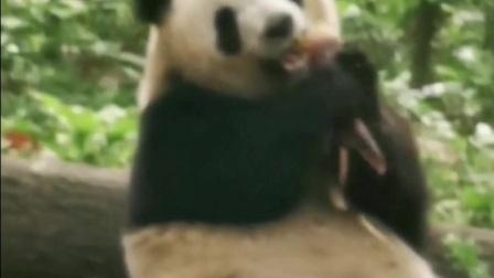 成都大熊猫基地🌴🌴🌴