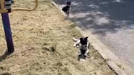 狗狗的日常18