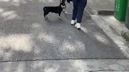 狗狗的日常17