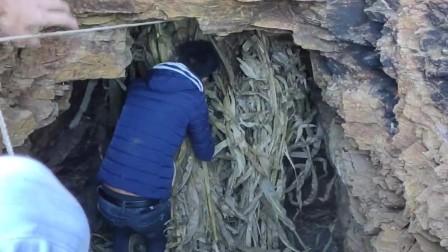 村里丢失很多老公鸡,在山洞寻找到踪迹