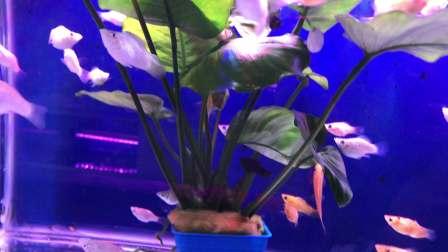 欣赏鱼缸里的热带鱼🐠