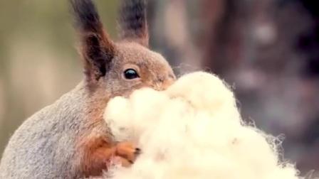 雪地松鼠说:就稀罕新疆棉花,今天弹开晒一晒   #探纪自然