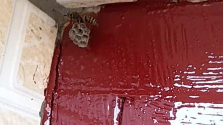 蜂巢边油漆