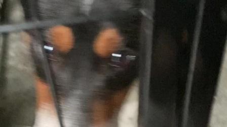 狗狗的日常生活2:窝里蹲
