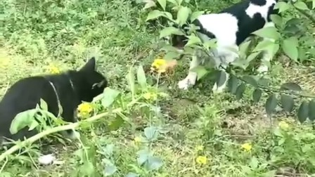 狗狗的日常生活2:抢香肠