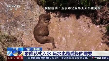 """云南·""""象""""往何处 象群花式入水 玩水也是成长的需要"""