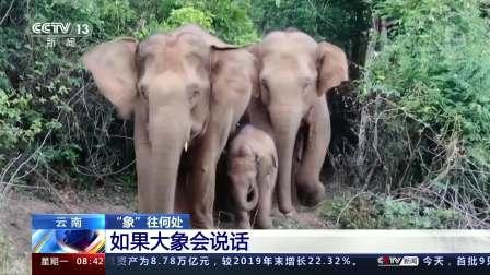 """云南·""""象""""往何处 如果大象会说话"""
