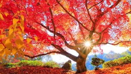 美丽的秋天来啦!