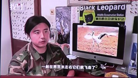 黑豹野保站 新京报 丹顶鹤.mov