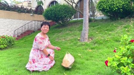 大王椰树花落