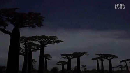 世界奇树 猢狲树夜晚开花