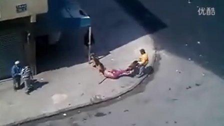 两狗撕咬活人