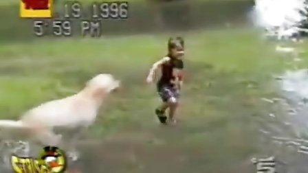 美国家庭搞笑录像-宝宝与搞笑动物篇