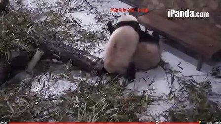 20131230呆毛二莉大战三百回合