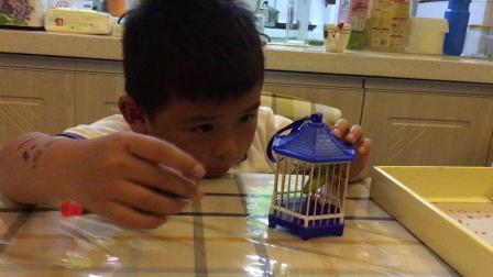 【7岁】5-20哈哈给跟爸爸一起玩买来的蝈蝈,不敢伸手拿IMG_0321
