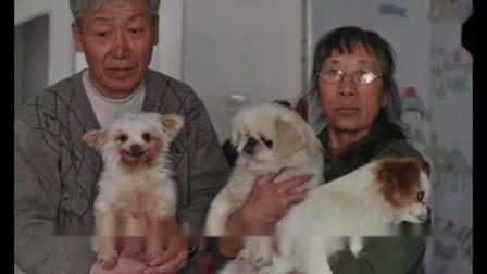 照顾收养流浪狗。