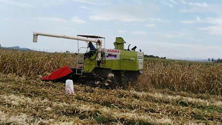天人玉米割台泰国收获视频