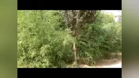 美丽的邱县(剪影)【7】:河北视频1