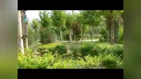 美丽的邱县(剪影)【13】:河北视频1