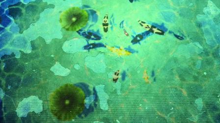 数字投影地面互动,数字池塘