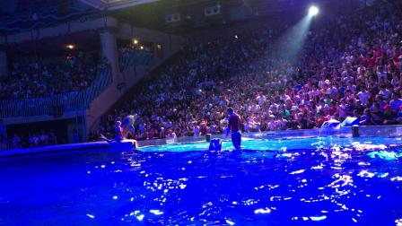 123大连海洋馆海豚表演