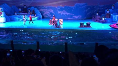 123海象表演