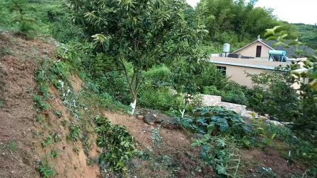 mei.纯污染的绿色果园