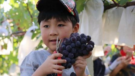 西安聚丰源现代农业园宣传视频