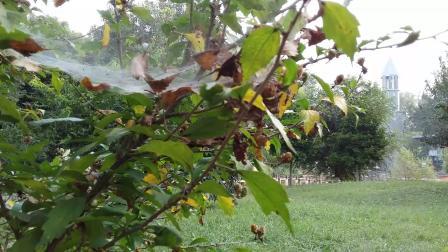 北京花绿的秋天