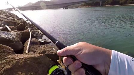 釣行短片:2018.4.8 久違的30cm黃腳鱲