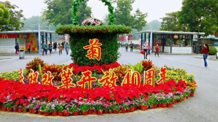 南京玄武湖菊花满园