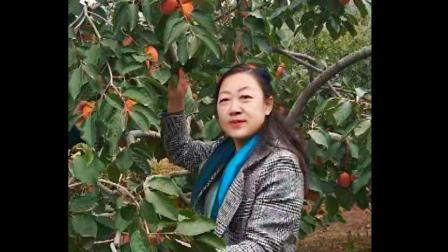 柿子红了 柿饼产业旺了_02