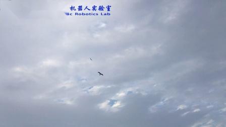与鹰共舞精华版20181111