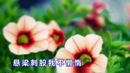 豫剧《秦雪梅》选段  见雪梅 真心关切我  视频伴奏制作:菏航_标清