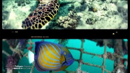 我在【马来西亚诗巴丹潜水】超清震撼水下世界—潜入诗巴丹截了一段小视频