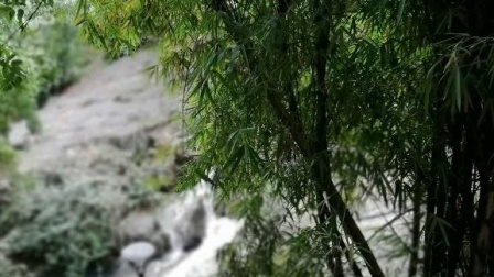 初冬亱雨朝转阴 ,虔诚何惧短渐淋 远离闹市心欲静,瞻仰瀑布洗凡尘