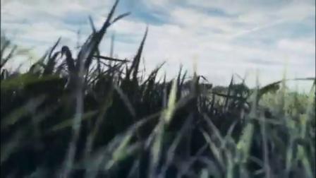 台灣墾丁的大草原