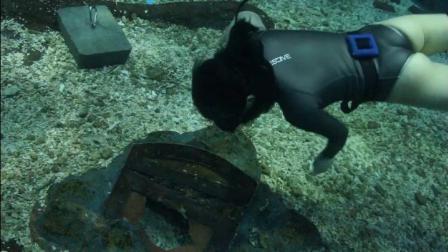 自由潜水的博博