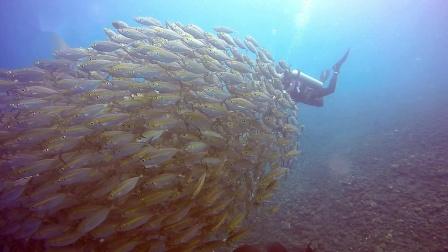 巴厘岛趣潜世界-OW考证片段zijing guyi