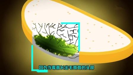 千万不要吃发霉面包看起来干净的那部分!