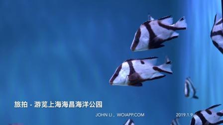 旅拍-上海海昌海洋公园