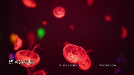 海洋馆-水母