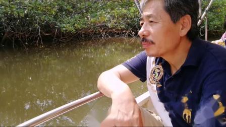 王子岛湿地原始森林