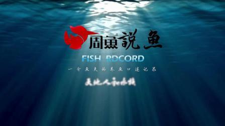周鱼说鱼第八期血统与养法2节选 白底透缸自然发育红龙