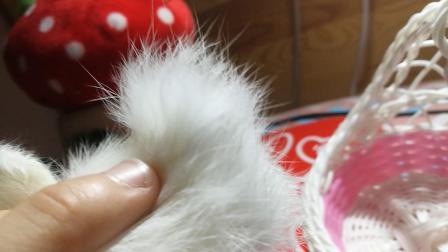 小兔玩具  小兔子玩具