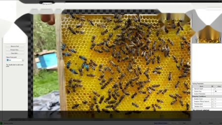 Deep Learning - Bees LocatePoints