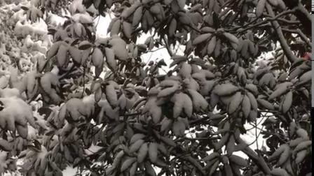 树枝上的雪