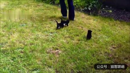 幽默搞笑猫咪视频第两千零二十七期