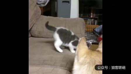 幽默搞笑猫咪视频第两千零二十八期