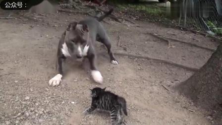 幽默搞笑猫咪视频第两千零三十六期